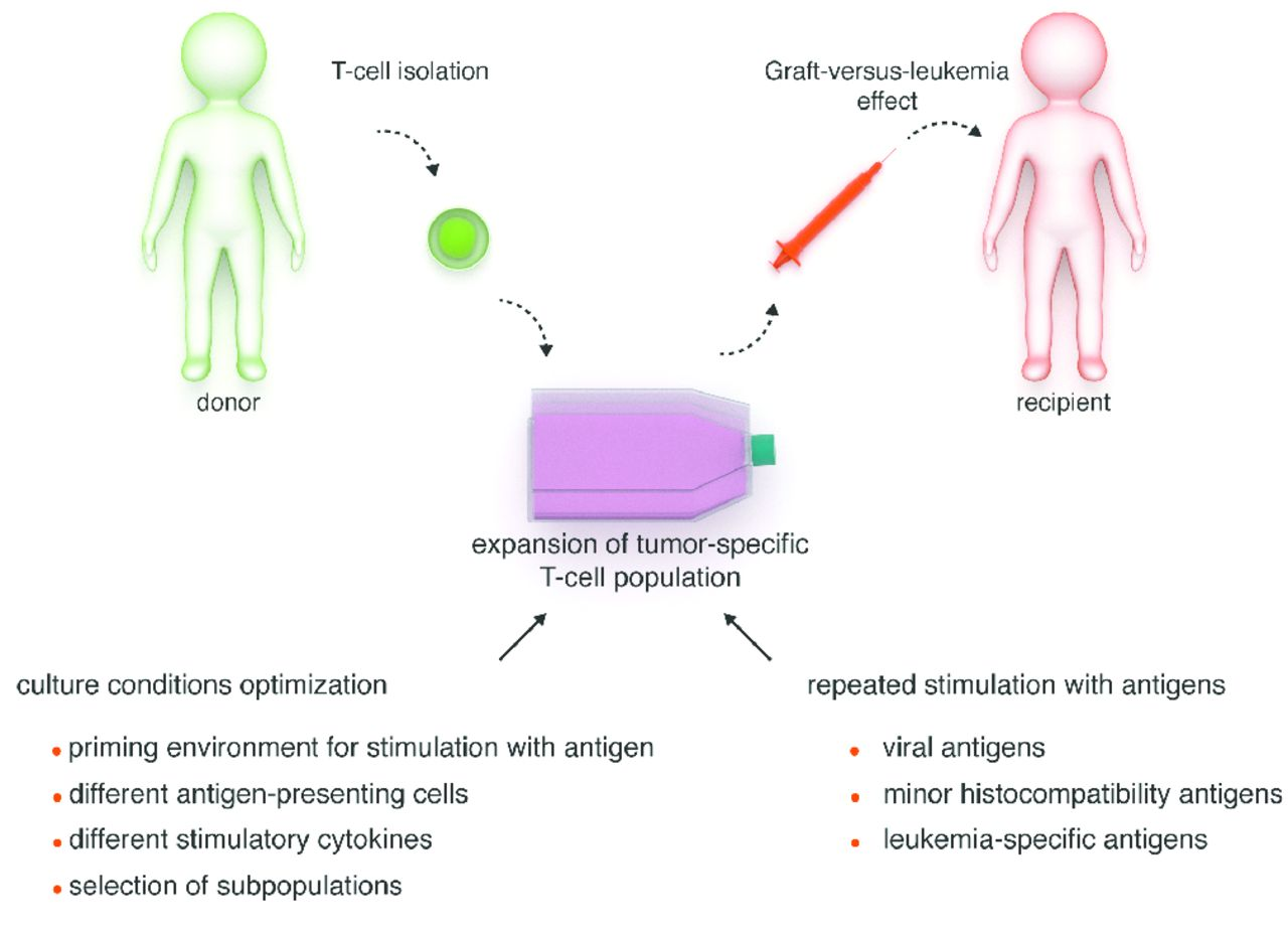 T Cell And Natural Killer Cell Therapies For Hematologic Malignancies After Hematopoietic Stem Cell Transplantation Enhancing The Graft Versus Leukemia Effect Haematologica