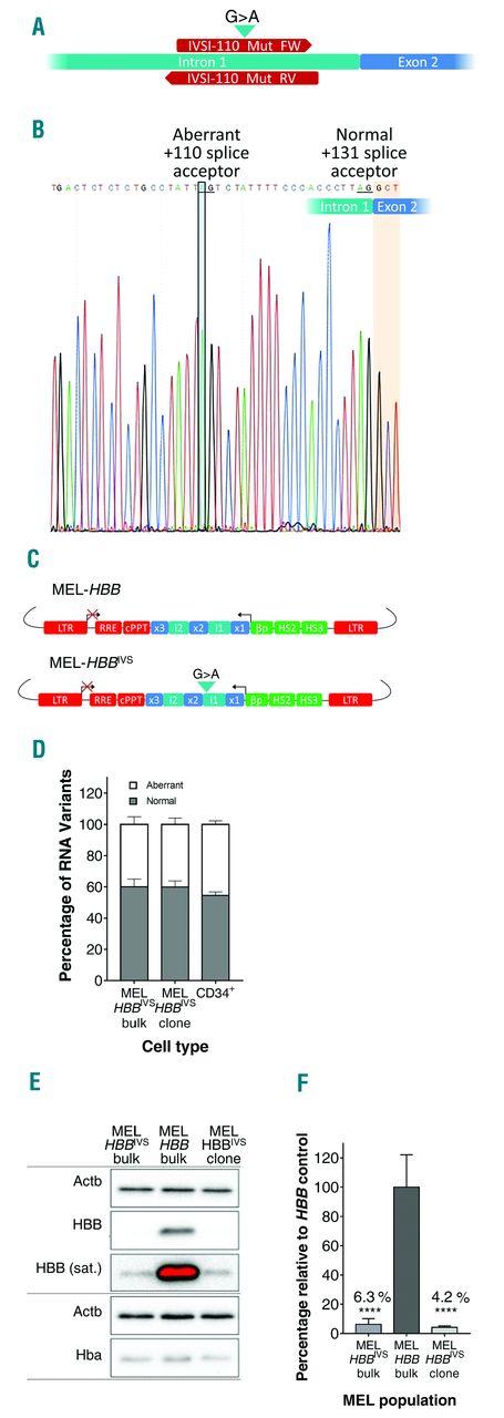 (PDF) A Vector-Based Short Hairpin RNA Targeting Aurora B